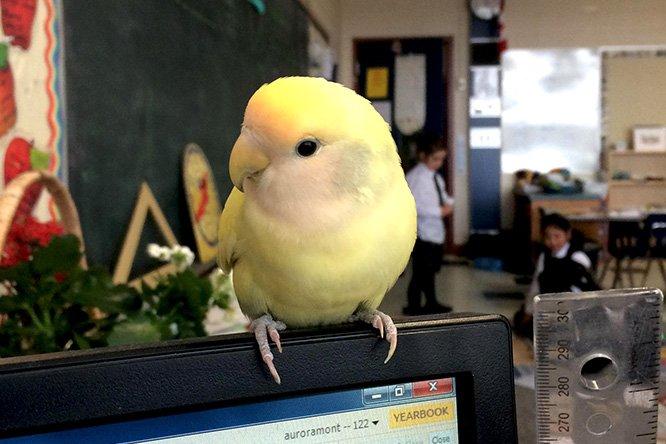 AMS school bird